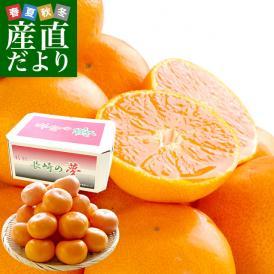 JA長崎せいひが誇る最高峰みかん!糖度13度以上の濃厚な甘みで登場!