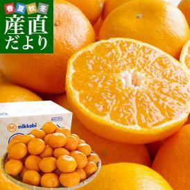 希少な三ケ日みかんの早生品種!濃厚な甘みが特徴です。