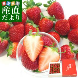 これぞ理想のイチゴ! 凛と美しい色と形!やさしい甘さとみずみずしい果汁!