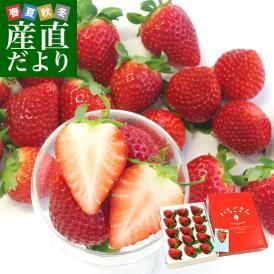 佐賀県より産地直送 JAからつ 新品種いちご いちごさん 苺専用箱ゆりカーゴ入り 450g (15粒から18粒) イチゴサン イチゴさん いちごサン 唐津 うまかもん 送料無料