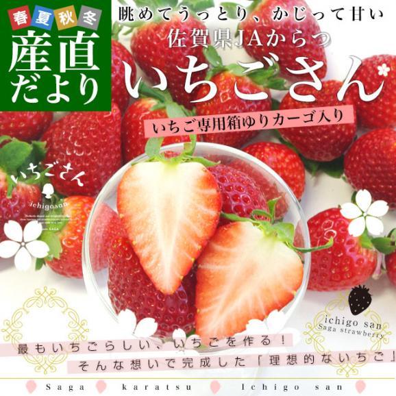 送料無料 佐賀県より産地直送 JAからつ 新品種いちご いちごさん DX 450g 15粒から18粒 苺専用箱ゆりカーゴ入り イチゴサン イチゴさん いちごサン 唐津 うまかもん02