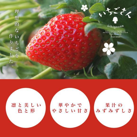 佐賀県より産地直送 JAからつ 新品種いちご いちごさん 苺専用箱ゆりカーゴ入り 450g (15粒から18粒) イチゴサン イチゴさん いちごサン 唐津 うまかもん 送料無料04