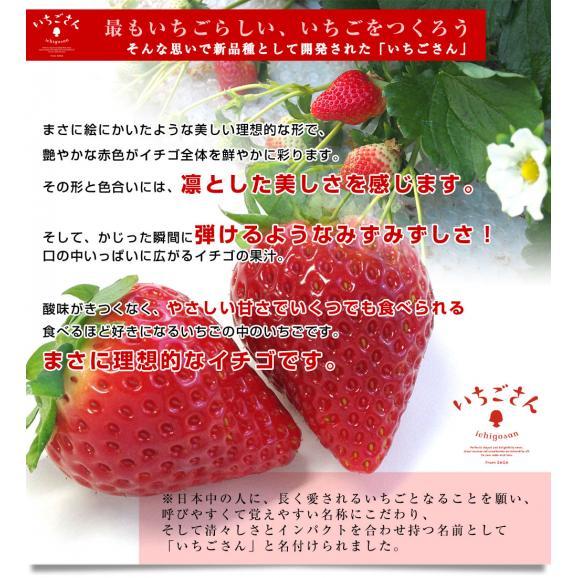佐賀県より産地直送 JAからつ 新品種いちご いちごさん 苺専用箱ゆりカーゴ入り 450g (15粒から18粒) イチゴサン イチゴさん いちごサン 唐津 うまかもん 送料無料05