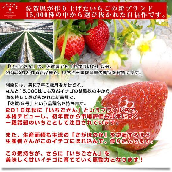 佐賀県より産地直送 JAからつ 新品種いちご いちごさん 苺専用箱ゆりカーゴ入り 450g (15粒から18粒) イチゴサン イチゴさん いちごサン 唐津 うまかもん 送料無料06