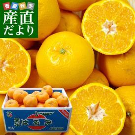 愛媛県より産地直送 JAにしうわ はるみ 3LからMサイズ 5キロ (18玉から35玉) 送料無料 柑橘 オレンジ ハルミ  西宇和 八幡浜