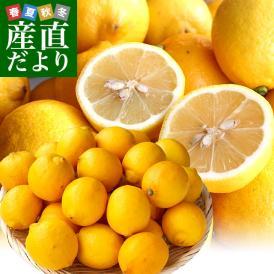 香川県から産地直送 JA香川県 完熟レモン 約 2.5キロ (20玉から25玉前後) 送料無料  柑橘 檸檬 国産レモン
