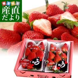 熊本県より産地直送 JAたまな 新品種のいちご ゆうべに 秀品 たっぷり2箱1080g (合計24粒から40粒)(540g×2箱) 送料無料 ユウベニ 玉名 農協苺 イチゴ