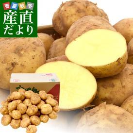 鹿児島県産 JA鹿児島いずみ他 赤土ばれいしょ 新じゃが ニシユタカ 2Lサイズ 約10キロ 馬鈴薯  じゃがいも ジャガイモ 市場スポット