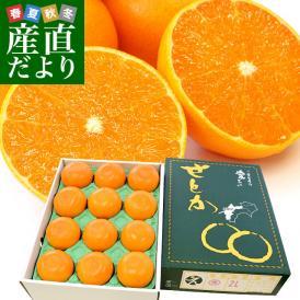 JAえひめ中央が誇る極上の柑橘「せとか」最上位等級・赤秀でお届け!