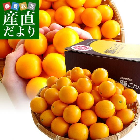 静岡県産 JAしみず こん太きんかん 3Lから2L 秀品 約1キロ 市場スポット 金柑 キンカン01