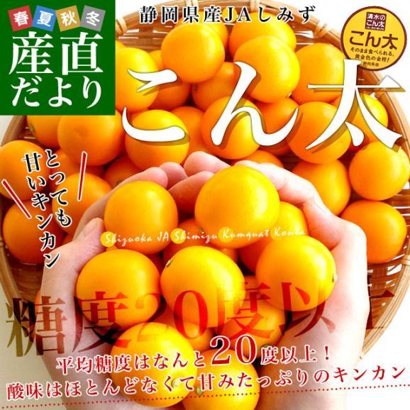 静岡県産 JAしみず こん太きんかん 3Lから2L 秀品 約1キロ 市場スポット 金柑 キンカン02