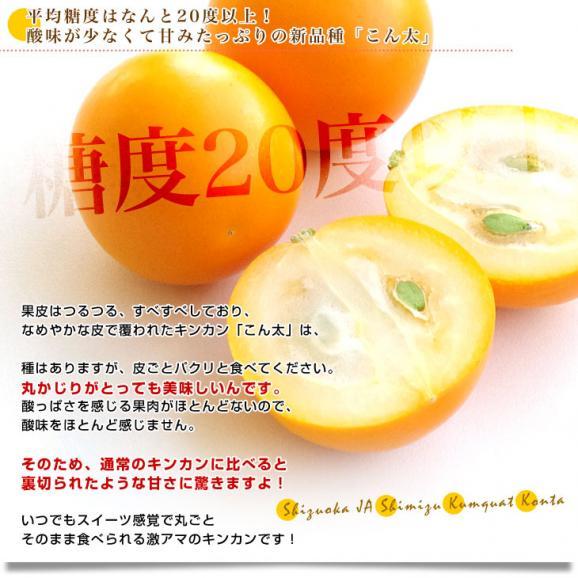 静岡県産 JAしみず こん太きんかん 3Lから2L 秀品 約1キロ 市場スポット 金柑 キンカン04