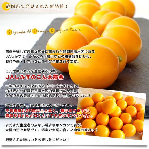静岡県産 JAしみず こん太きんかん 3Lから2L 秀品 約1キロ 市場スポット 金柑 キンカン05