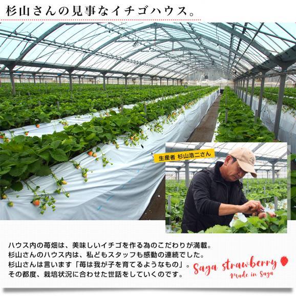 佐賀県より産地直送 佐賀県 杉山さんグループの黒いちご 真紅の美鈴(みすず) 大粒 化粧箱 約230g (6粒から8粒) 苺 イチゴ しんくのみすず 黒いちご05