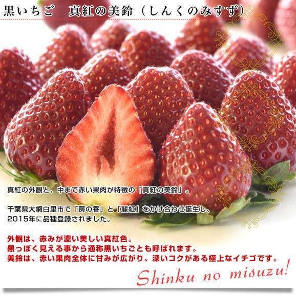 佐賀県より産地直送 佐賀県 杉山さんグループの黒いちご 真紅の美鈴(みすず) 化粧箱入り   約230g (9粒から15粒) 苺 イチゴ しんくのみすず 黒いちご04