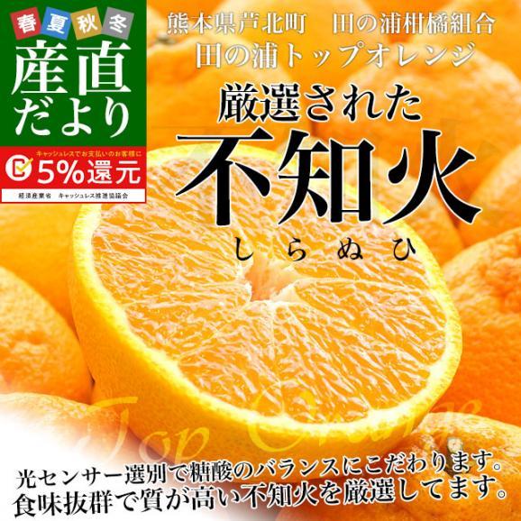 熊本県産 田の浦柑橘組合 トップオレンジ 不知火(しらぬひ) 3LからLサイズ 5キロ (18玉から24玉) 送料無料 しらぬい 柑橘 オレンジ 市場スポット02