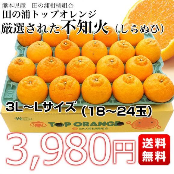 熊本県産 田の浦柑橘組合 トップオレンジ 不知火(しらぬひ) 3LからLサイズ 5キロ (18玉から24玉) 送料無料 しらぬい 柑橘 オレンジ 市場スポット03