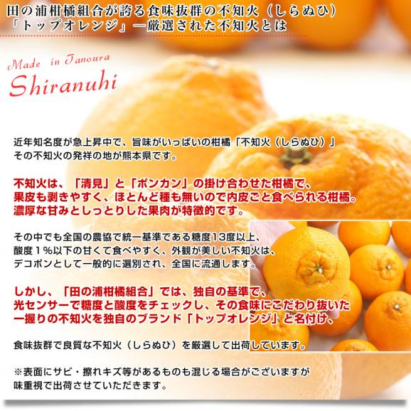 熊本県産 田の浦柑橘組合 トップオレンジ 不知火(しらぬひ) 3LからLサイズ 5キロ (18玉から24玉) 送料無料 しらぬい 柑橘 オレンジ 市場スポット04