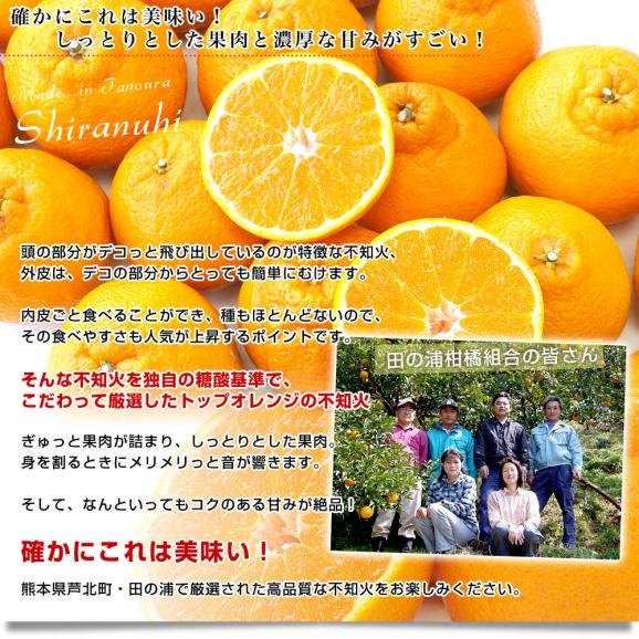 熊本県産 田の浦柑橘組合 トップオレンジ 不知火(しらぬひ) 3LからLサイズ 5キロ (18玉から24玉) 送料無料 しらぬい 柑橘 オレンジ 市場スポット05