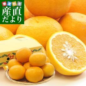 熊本県産 田の浦柑橘組合 甘夏 (あまなつ) 2LからLサイズ 3キロ (8玉から9玉) 送料無料 柑橘 オレンジ あまなつ 市場スポット