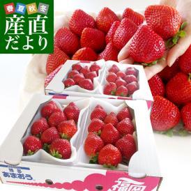 福岡県産 超盛りあまおう DX たっぷり2箱 1080g (合計32粒から48粒)(540g×2箱) 送料無料 アマオウ デラックス 農協 いちご 苺 イチゴ