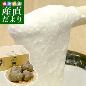 愛媛県より産地直送 四国中央JAうま 山の芋 やまじ丸 2キロ (4玉から5玉)  送料無料 やまじ王 ヤマジ やまのいも つくねいも 宇摩農協