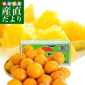 愛媛県産 JAえひめ中央 中島のいよかん 味優先のご家庭用 LからMサイズ 10キロ (44玉から52玉前後) 柑橘 オレンジ 伊予柑 市場スポット 送料無料