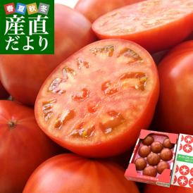 茨城県より産地直送 NKKアグリドリーム スーパーフルーツトマト 9度+ A品 約1キロ(8玉から16玉)  送料無料 高糖度トマト NKKトマト