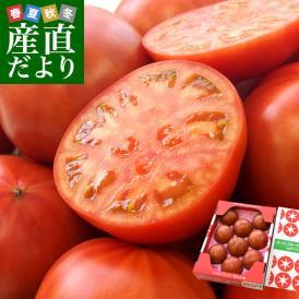 トマトの常識が変わる!甘みと旨みがたっぷりのフルーツトマト!