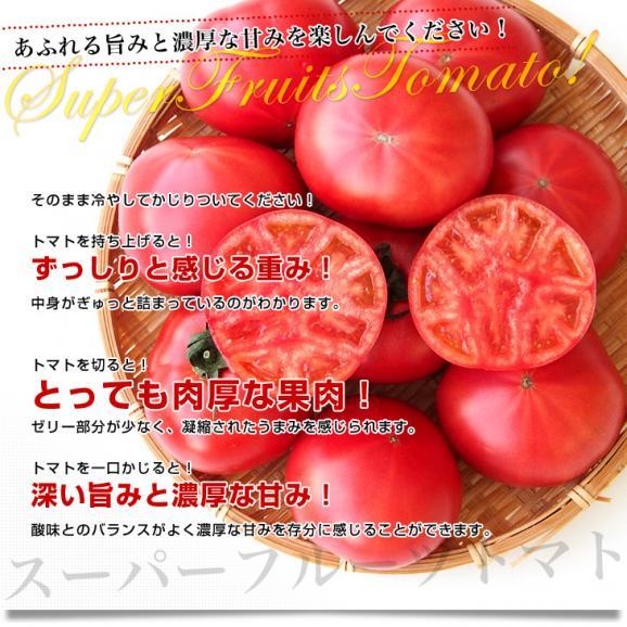 茨城県より産地直送 NKKアグリドリーム スーパーフルーツトマト 9度+ A品 約1キロ(8玉から16玉)  送料無料 高糖度トマト NKKトマト05