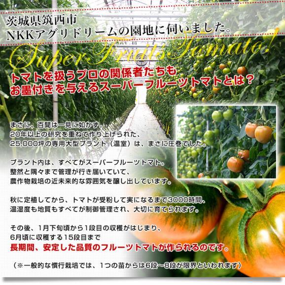 茨城県より産地直送 NKKアグリドリーム スーパーフルーツトマト 9度+ A品 約1キロ(8玉から16玉)  送料無料 高糖度トマト NKKトマト06