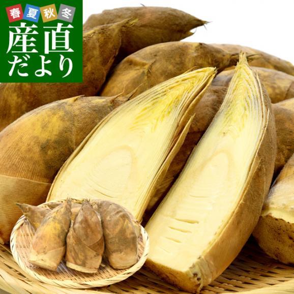 熊本県産 西村青果 タケノコ 2キロ (4本から8本前後) 送料無料 市場発送 たけのこ 筍 竹の子01