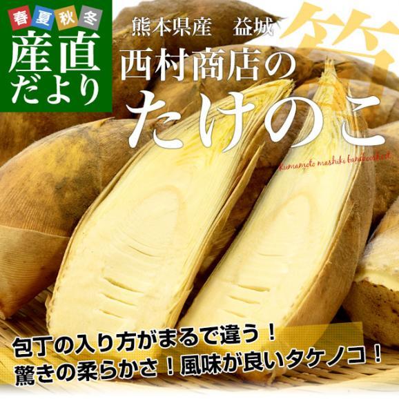 熊本県産 西村青果 タケノコ 2キロ (4本から8本前後) 送料無料 市場発送 たけのこ 筍 竹の子02