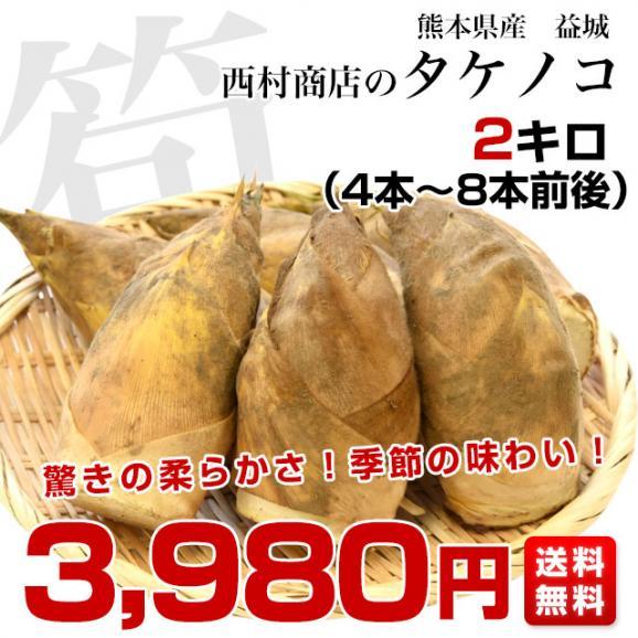 熊本県産 西村青果 タケノコ 2キロ (4本から8本前後) 送料無料 市場発送 たけのこ 筍 竹の子03