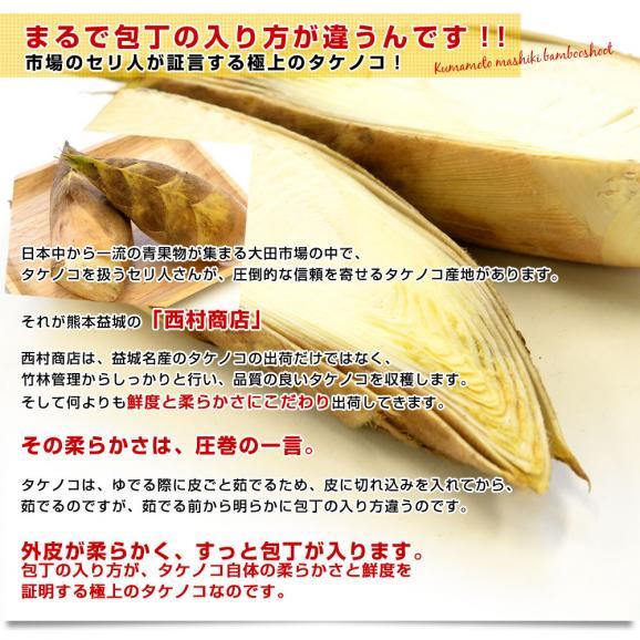 熊本県産 西村青果 タケノコ 2キロ (4本から8本前後) 送料無料 市場発送 たけのこ 筍 竹の子04