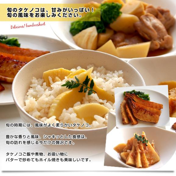 熊本県産 西村青果 タケノコ 2キロ (4本から8本前後) 送料無料 市場発送 たけのこ 筍 竹の子05