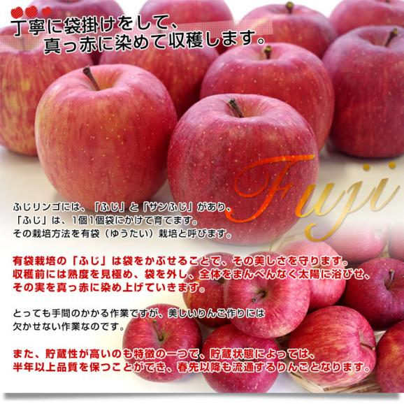 青森県より産地直送 高木商店 マルタカブランド 高木のふじりんご CA貯蔵品 理由あり 3キロ (9玉から10玉) 送料無料 林檎 リンゴ ※クール便05