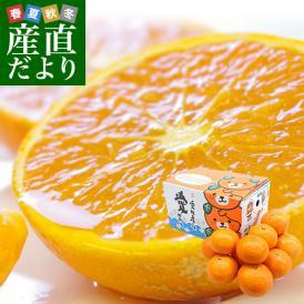 愛媛県産 JAえひめ南 南津海(なつみ) 3キロ (15玉から23玉前後) 送料無料 市場発送 柑橘