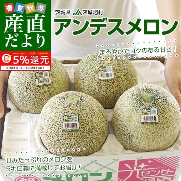茨城県産 JA茨城旭村 アンデスメロン 4Lから2Lサイズ 5キロ箱 (3玉から5玉) 送料無料 市場スポット02