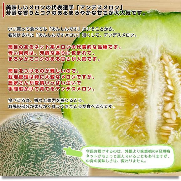 茨城県産 JA茨城旭村 アンデスメロン 4Lから2Lサイズ 5キロ箱 (3玉から5玉) 送料無料 市場スポット04