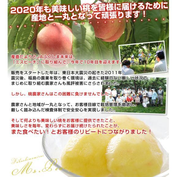 福島県より産地直送 JAふくしま未来 秀品桃 ミスピーチ 1.8キロ×2箱セット 合計3.6キロ以上  (7玉から9玉×2箱) もも 送料無料  福島ミスピーチ04