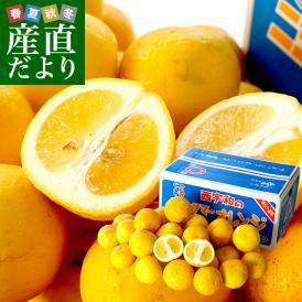 愛媛県より産地直送 JAにしうわ ニューサマーオレンジ ご家庭用 5キロ(25玉から31玉)送料無料