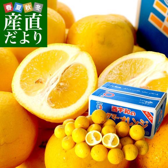 愛媛県より産地直送 JAにしうわ ニューサマーオレンジ ご家庭用 5キロ(25玉から31玉)送料無料01