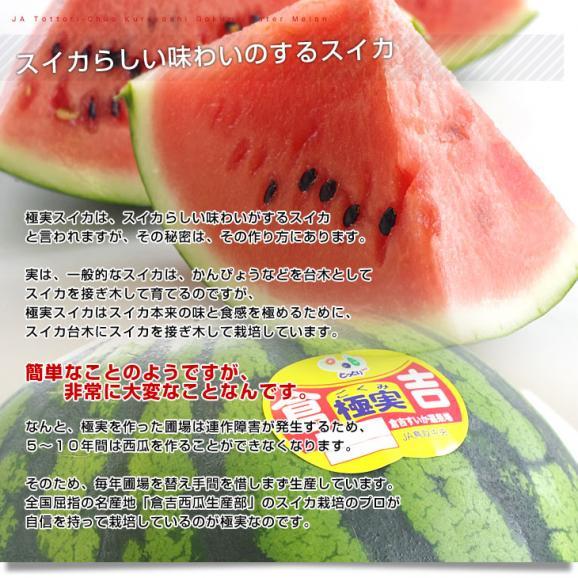 鳥取県より産地直送 JA鳥取中央 倉吉スイカ 極実(ごくみ) 秀品 3L以上の大玉 8キロ以上 送料無料 西瓜 すいか05