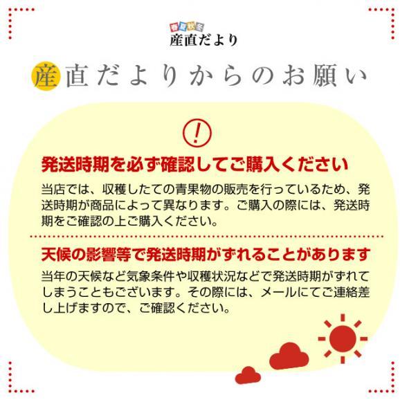鳥取県より産地直送 JA鳥取中央 倉吉スイカ 極実(ごくみ) 秀品 3L以上の大玉 8キロ以上 送料無料 西瓜 すいか06