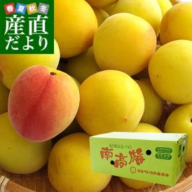 和歌山県産 JA紀州 みなべの南高梅  2Lサイズ 5キロ 送料無料 市場発送 うめ ウメ なんこうばい