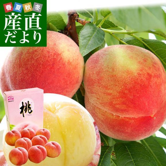 和歌山県より産地直送 JA紀の里 紀の里の桃 嶺鳳 赤秀品 1.8キロ (6玉から8玉) 送料無料 桃 もも01