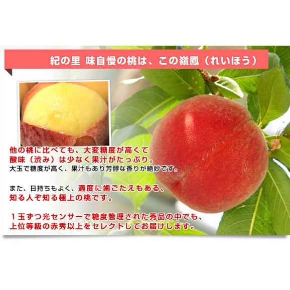 和歌山県より産地直送 JA紀の里 紀の里の桃 嶺鳳 赤秀品 1.8キロ (6玉から8玉) 送料無料 桃 もも04