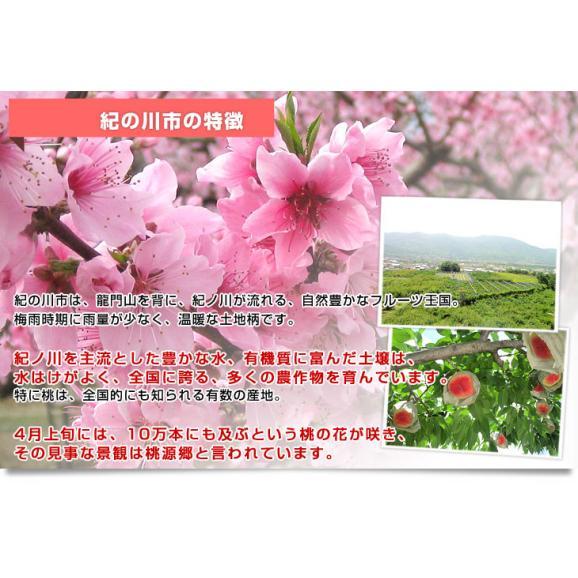 和歌山県より産地直送 JA紀の里 紀の里の桃 嶺鳳 赤秀品 1.8キロ (6玉から8玉) 送料無料 桃 もも05