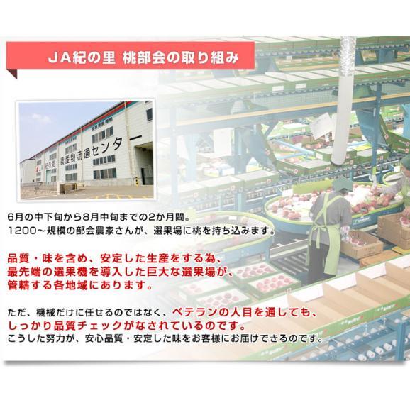 和歌山県より産地直送 JA紀の里 紀の里の桃 嶺鳳 赤秀品 1.8キロ (6玉から8玉) 送料無料 桃 もも06